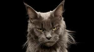 Тесты какая порода кошки подходит тебе