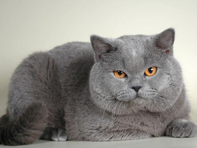 Тест какая кошка подходит по характеру