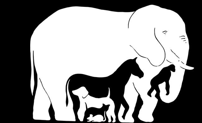 конечном сколько животных видишь на картинке ответ ожидании чуда съёмки