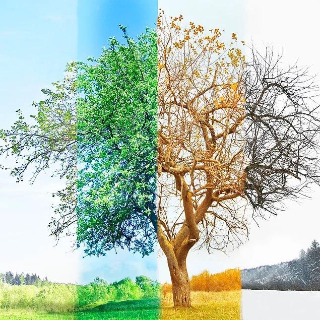 будет дерево зимой летом на одной картинке цезарь креветками